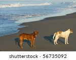 two dogs on beach in puerto... | Shutterstock . vector #56735092