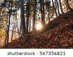 sunrise in the forest in autumn | Shutterstock . vector #567356821