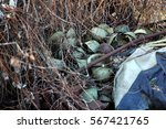 old rusty military helmets at... | Shutterstock . vector #567421765