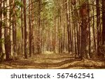 north scandinavian pine forest  ... | Shutterstock . vector #567462541