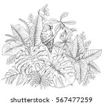 hand drawn branches and leaves...   Shutterstock .eps vector #567477259