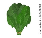 bunch of fresh spinach close up.... | Shutterstock .eps vector #567478501