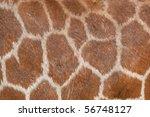 Background Of Giraffe Skin