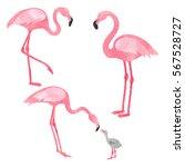 set of watercolor flamingos... | Shutterstock .eps vector #567528727