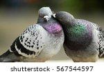 Dove Love