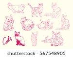 cat   Shutterstock .eps vector #567548905