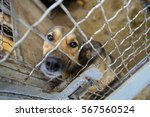 abandoned dog in the kennel... | Shutterstock . vector #567560524