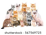 group of cute cats on white... | Shutterstock . vector #567569725