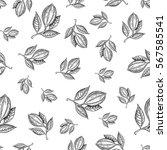 cocoa branch vector seamless... | Shutterstock .eps vector #567585541