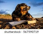 One Intelligent Black Dog...