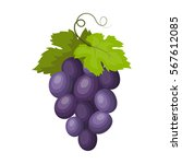 bunch of wine grapes icon in... | Shutterstock .eps vector #567612085