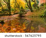 Stock photo japanese garden in autumn 567625795