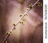 Beautiful Tree Buds In Spring...