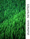 forest of pine trees in... | Shutterstock . vector #567647521