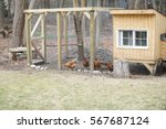 Chicken coop in back yard in...
