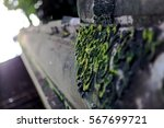 a moss growing on the wall  | Shutterstock . vector #567699721