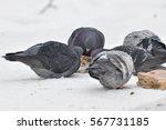 Feeding Pigeons In Winter