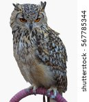 Stock photo a big royal owl isolated on whte background 567785344