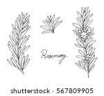 set of herbs. rosemary. hand...   Shutterstock .eps vector #567809905