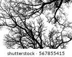 realistic oak tree branches... | Shutterstock .eps vector #567855415