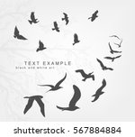 wedge of birds flying in the sky | Shutterstock .eps vector #567884884