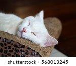 Stock photo sleeping cute cat 568013245