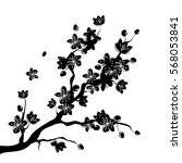 black beautiful sakura or... | Shutterstock .eps vector #568053841