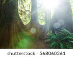 fabulous rain forest in olympic ... | Shutterstock . vector #568060261