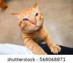Stock photo cute orange tabby cat cat orange color 568068871