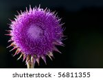 Purple Blossomed Thistle...