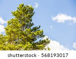 Small photo of The crown of the tree against the blue sky.