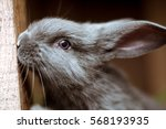 rabbit. mammal animal in the... | Shutterstock . vector #568193935