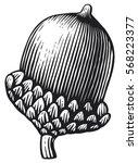 acorn  vintage engraved vector... | Shutterstock .eps vector #568223377