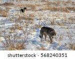 greyhound in winter | Shutterstock . vector #568240351