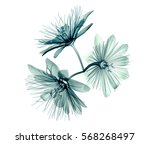 x ray image of a flower ... | Shutterstock . vector #568268497