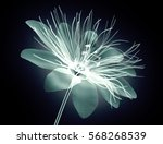 x ray image of a flower ... | Shutterstock . vector #568268539