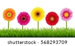 gerbers and grass border ... | Shutterstock .eps vector #568293709