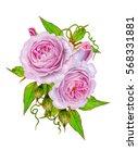 flower composition. bouquet... | Shutterstock . vector #568331881