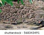 A Fungus Growing On A Flat Dea...