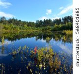Stock photo forest lake with clear cold water 568401685