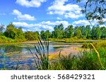 Summer Pond Landscape