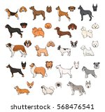 dog breeds  side view and... | Shutterstock .eps vector #568476541