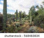 arizona sonora desert museum is ... | Shutterstock . vector #568483834