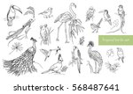 realistic hand drawn contour... | Shutterstock .eps vector #568487641
