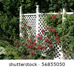 A White Trellis Supporting A...