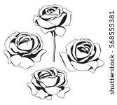 silhouette of roses | Shutterstock .eps vector #568555381
