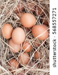 fresh egg from chicken farm  | Shutterstock . vector #568557271