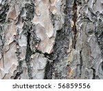 Natural Background  A Bark Of...