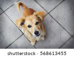 Stock photo cute puppy looking at the camera 568613455