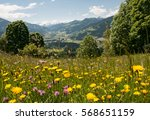 Flowering Meadow In The...